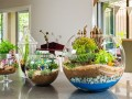 Ideas to make Terrariums