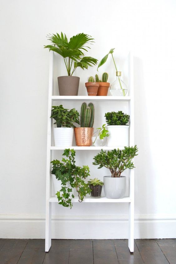 Ideas Decorating Home Plants 19 How To Organize