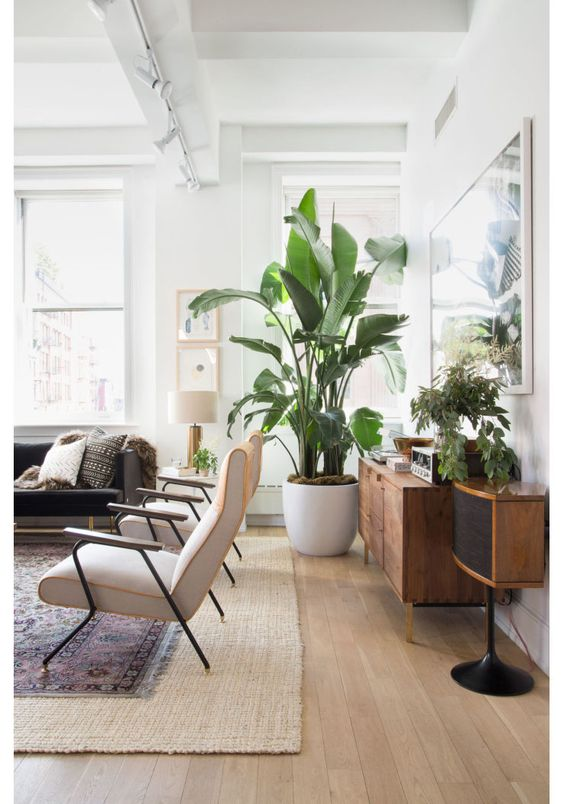 Ideas For Decorating Your Home With Plants