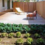 huerta organica en el hogar