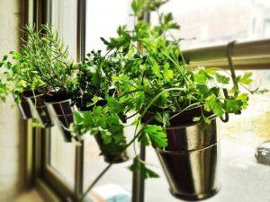 jardin de hiervas en la cocina