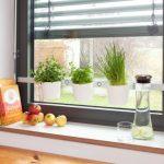jardin de hiervas para la cocina