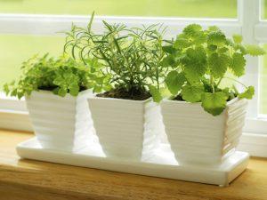 jardin en la cocina