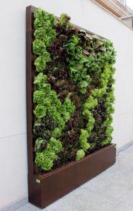opciones-para-jardines-verticales (14)