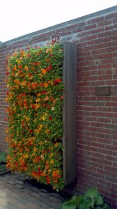 opciones-para-jardines-verticales (17)