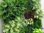 24 opciones para Jardines Verticales