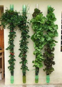 opciones-para-jardines-verticales (22)