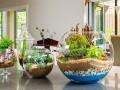 Como Hacer un terrarium o Terrario Paso a Paso DIY
