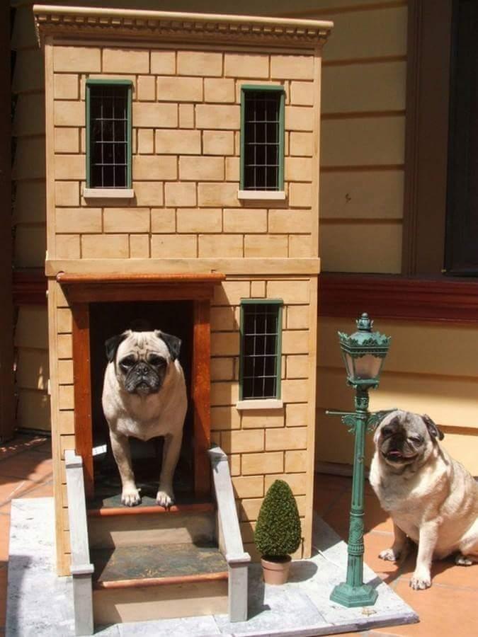 Ideas para hacer casas de perros 16 decoracion de for Construir casa de perro