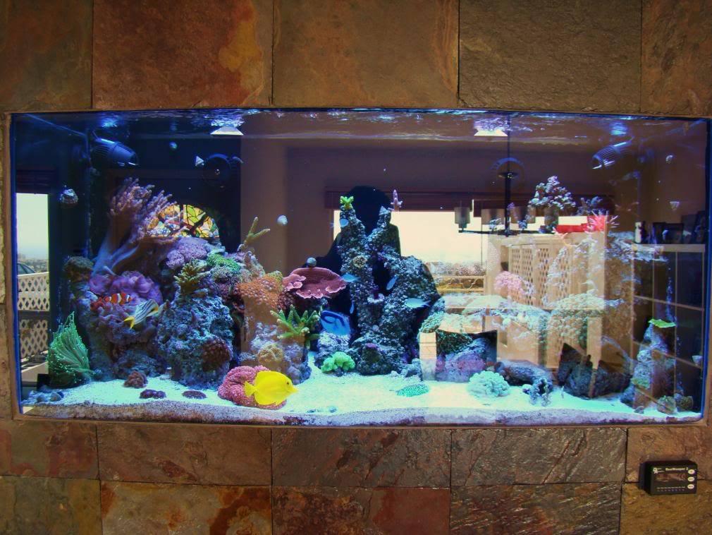 Decoracion de interiores con peceras 1 decoracion de interiores fachadas para casas como - Decoracion acuario marino ...