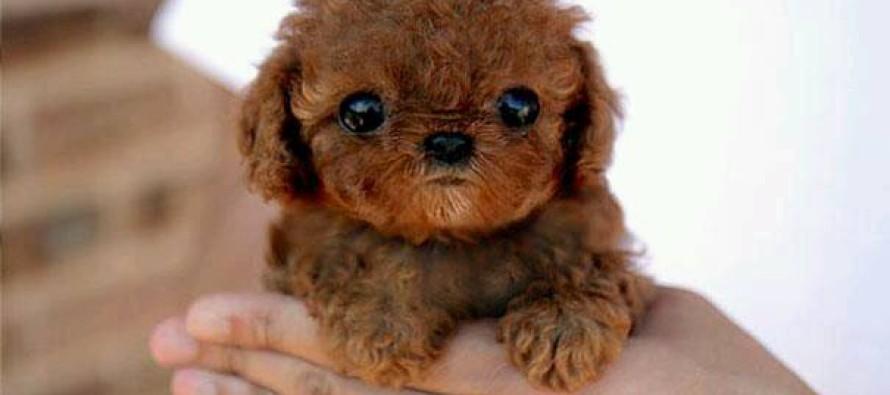 Fotos a cachorritos