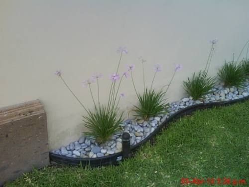 jardines traseros para casas pequeñas