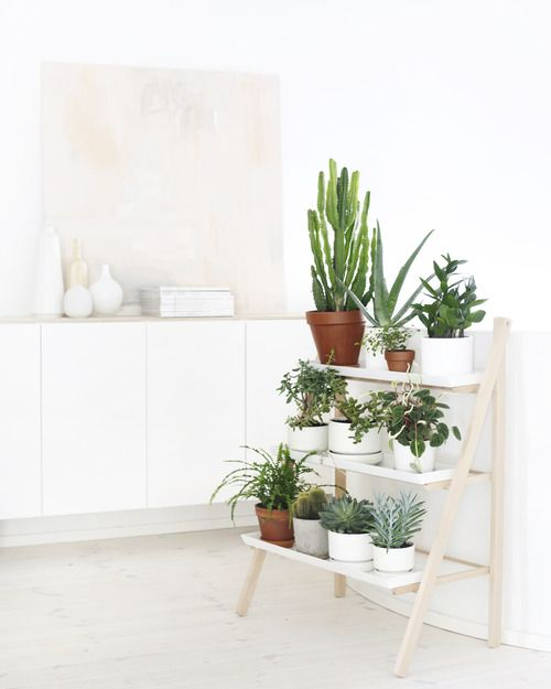 33 maravillosas ideas para decorar con plantas for Ideas para decorar interiores con plantas
