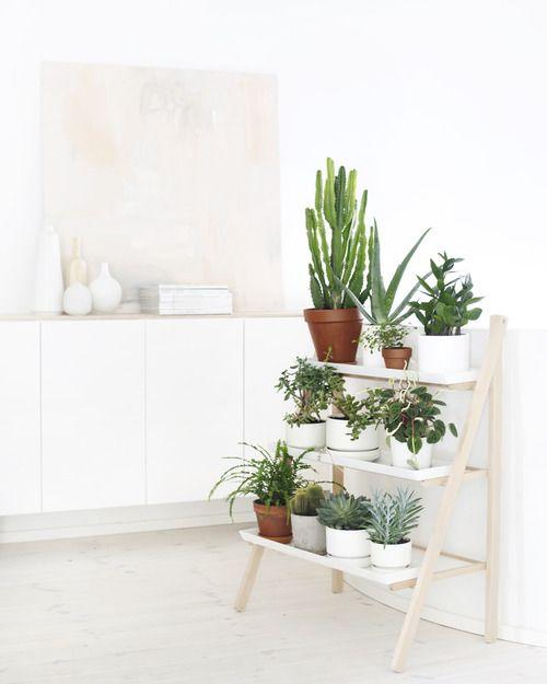 33 maravillosas ideas para decorar con plantas for Bano ocupado en ingles