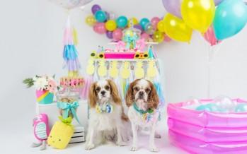 ¡Fiesta tropical para tus mascotas!