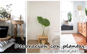 Las plantas como elemento estrella decorativo de interiores