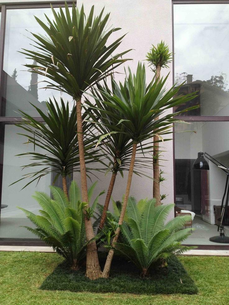 Lindas ideas para intentar en tu jardin 39 decoracion de for Yuca planta de exterior