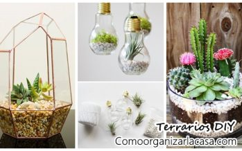 42 ideas de terrarios – DIY Terrariums