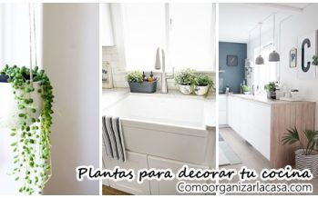 34 Ideas de plantas que pueden decorar tu cocina
