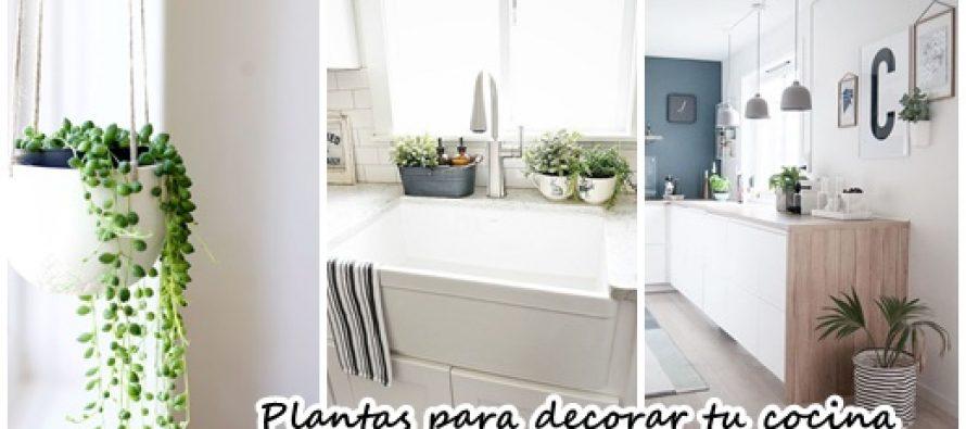 34 ideas de plantas que pueden decorar tu cocina curso - Plantas en la cocina ...