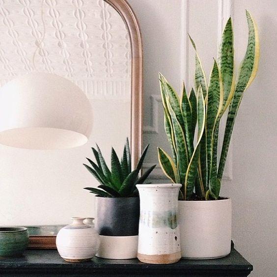 30 ideas decorar bano plantas 7 decoracion de - Ideas para decorar banos ...