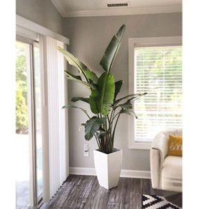 34-ideas-decorar-sala-plantas (12)