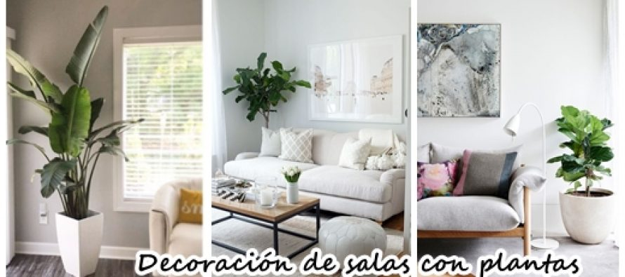 34 ideas para decorar tu sala con plantas curso de Ideas para decorar mi sala