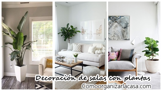 34 ideas para decorar tu sala con plantas decoracion de Ideas para decorar mi sala