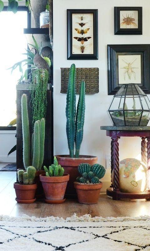 Ideas decorar interiores cactus 12 decoracion de for Cactus para interior