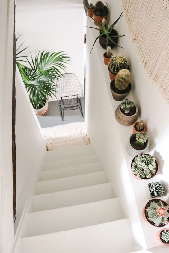 Ideas decorar interiores cactus 13 decoracion de for Cactus para interior