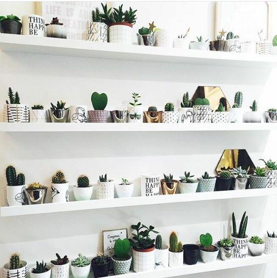 Ideas-decorar-interiores-cactus (14)
