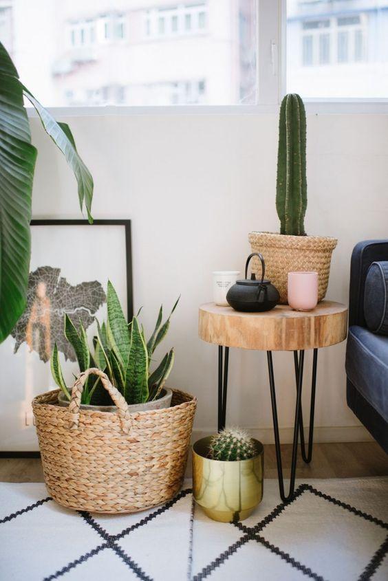 Ideas decorar interiores cactus 15 decoracion de for Cactus para interior