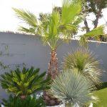 17 Ideas preciosas Para decorar tu Jardín