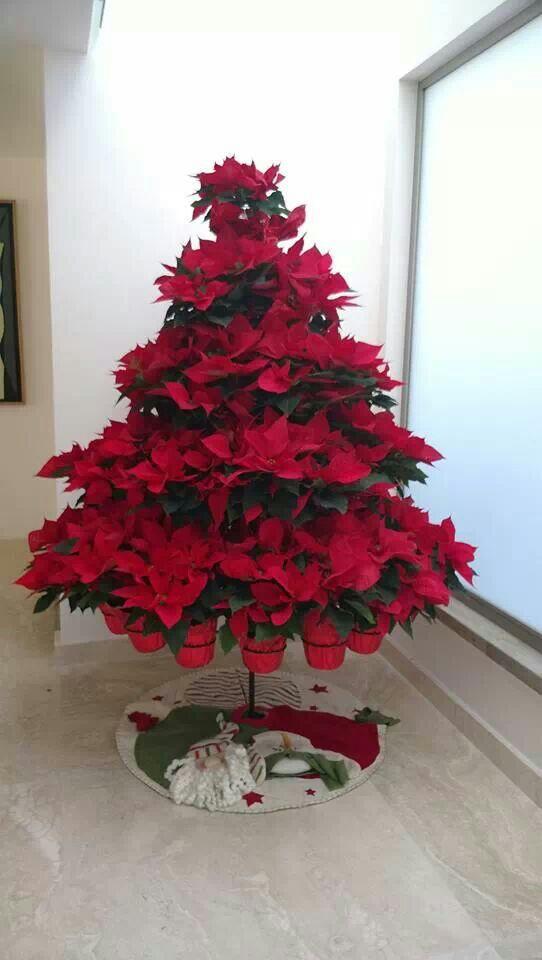 Nochebuenas para decorar esta navidad 2017 - 2018 (1)