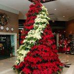 Nochebuenas para decorar esta navidad 2017 - 2018 (12)