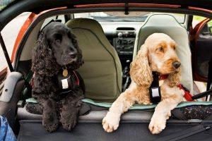 Guia para viajar con mascotas (1)