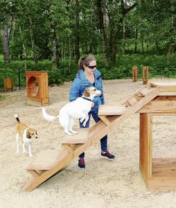 Guia para viajar con mascotas (10)