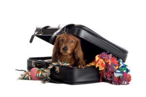 Guia para viajar con mascotas (11)
