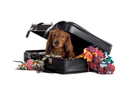 ¿Que debo llevar para viajar con mi mascota?