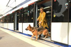 Guia para viajar con mascotas (12)