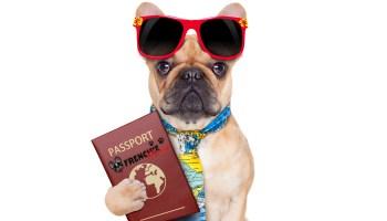 Guia para viajar con mascotas (16)