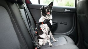 Guia para viajar con mascotas (18)