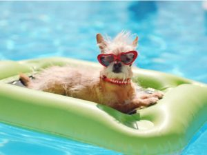 Guia para viajar con mascotas (2)