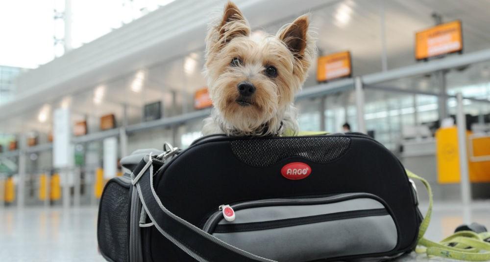 ¿Como viajar en barco con mascota?