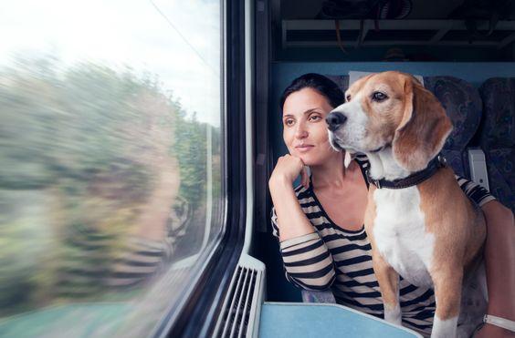 ¿Como viajar en tren con mascota?