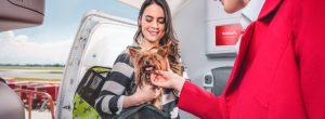 Guia para viajar con mascotas (4)