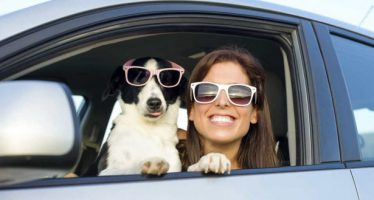 Guía para viajar con mascotas