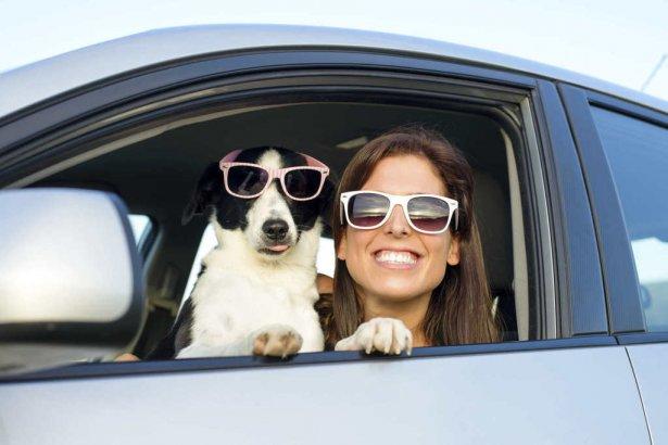Guia para viajar con mascotas (7)