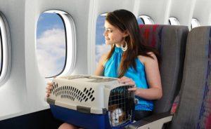 Guia para viajar con mascotas (8)