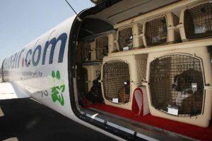 Guia para viajar con mascotas (9)